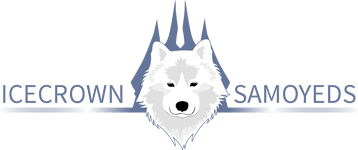 Icecrown Samoyeds