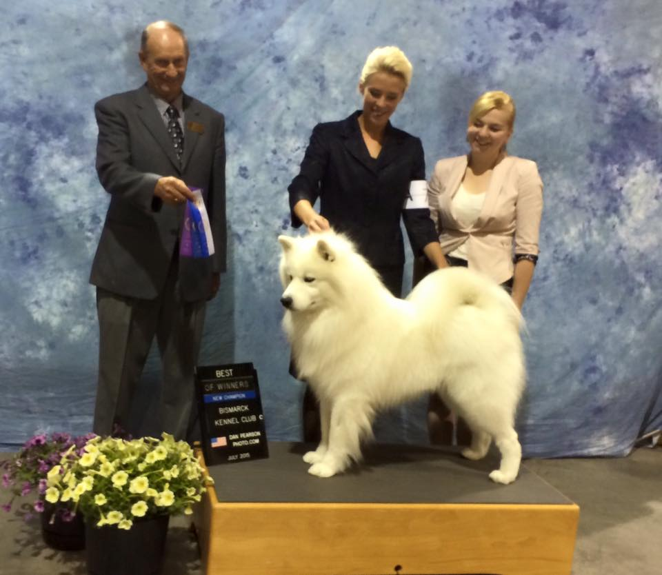 AKC Samoyed Champion