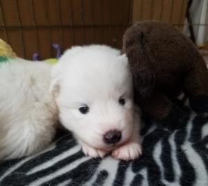 Ysera at 4 weeks