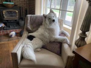 Princess on her throne :)